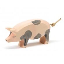 Ostheimer Schwein gefleckt Kopf hoch