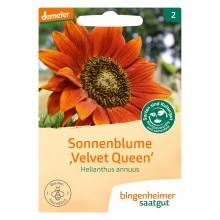 bingenheimer saatgut Sonnenblume 'Velvet Queen' (Helianthus annuus) Samen B277N
